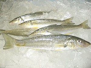 How to cook fish recipes for whiting fish for How to cook whiting fish